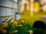 2012 Spring Flowers II by stewa2jm