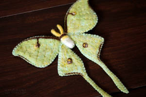 Luna Moth 1 by quirkandbramble