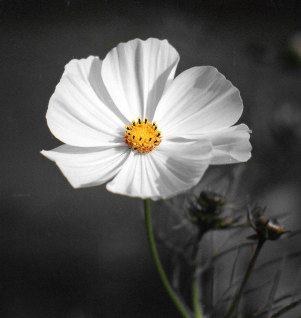 Just a Cosmos
