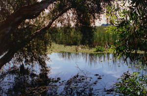 Swamp Reflections by Tailgun2009