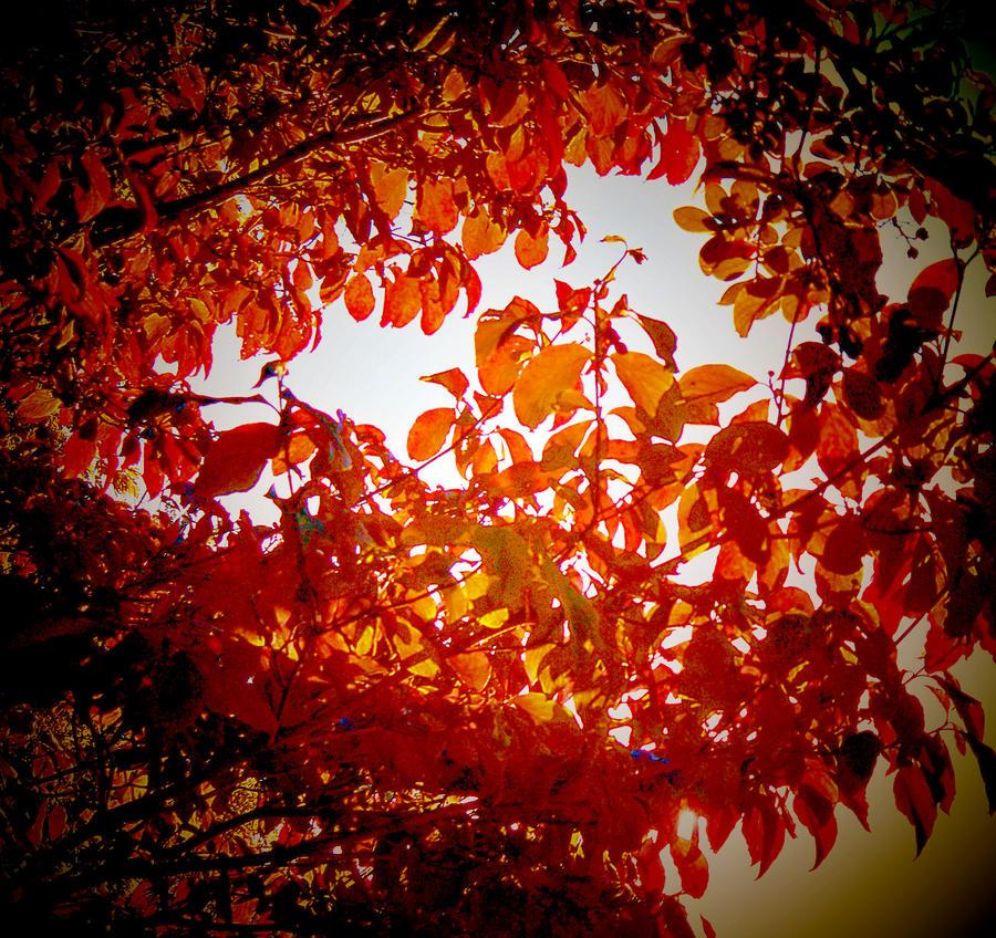 Autumn Arrives by Tailgun2009
