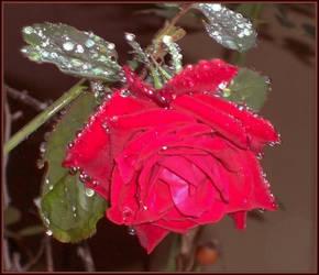 Raining Again by Tailgun2009