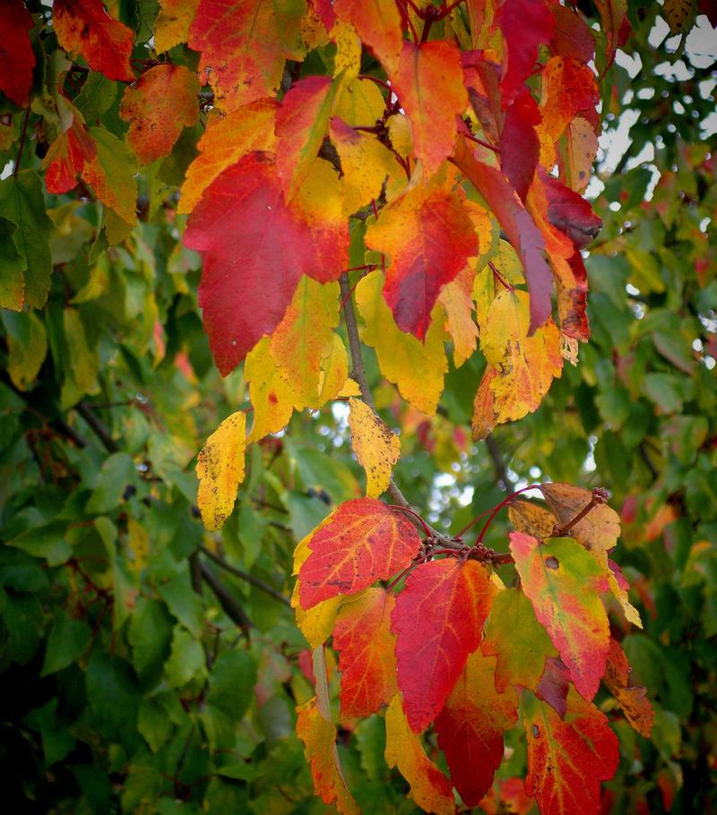 Soft Autumn Colors By Tailgun2009 On Deviantart
