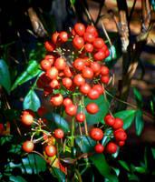 More Berries by Tailgun2009