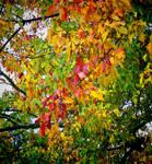 Overcast Autumn