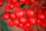Berries 2-2-2010