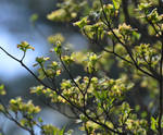 More Spring 3