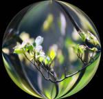 Spring Globe
