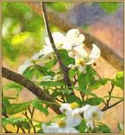 Tree blooms painted