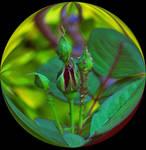 Rose bud globe