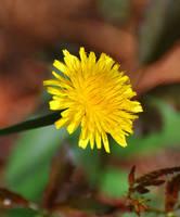 Slightly Yellow by Tailgun2009