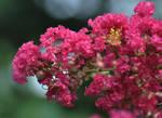 Blooming 7-2-10