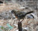 Bird 7-30-10