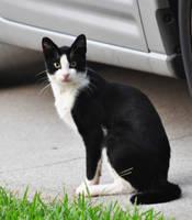 Kitty Kitty by Tailgun2009
