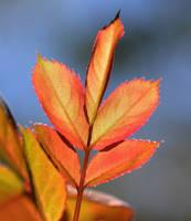 Leaves N Sky by Tailgun2009