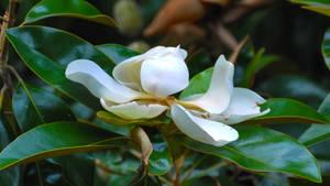 Justa Magnolia enjoying life