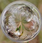 The Wishing Bubble