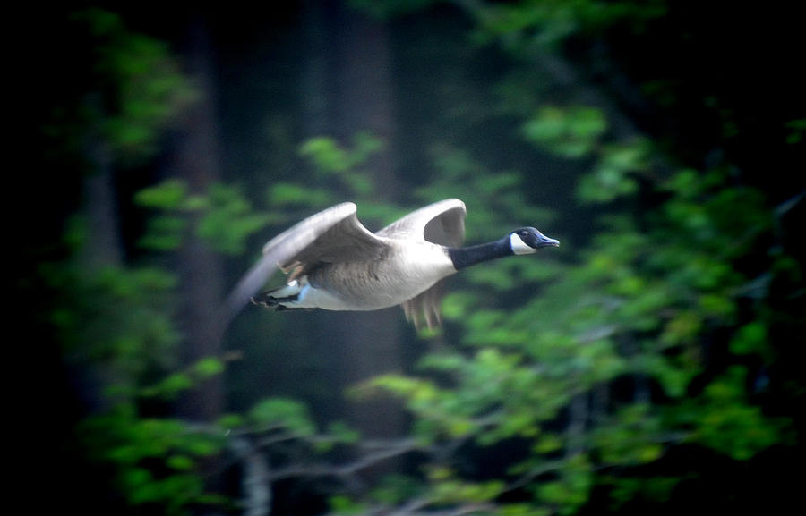 Flight 5-28-12 by Tailgun2009
