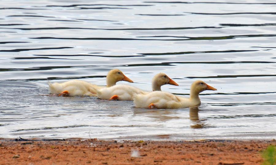 Taken a swim 5-28-12 by Tailgun2009
