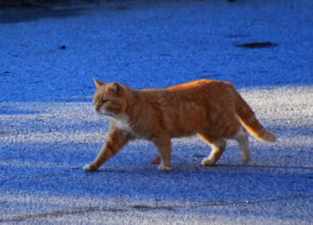 Cat 1-31-13 by Tailgun2009