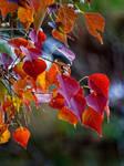 Autumn Leaves 11-22-13