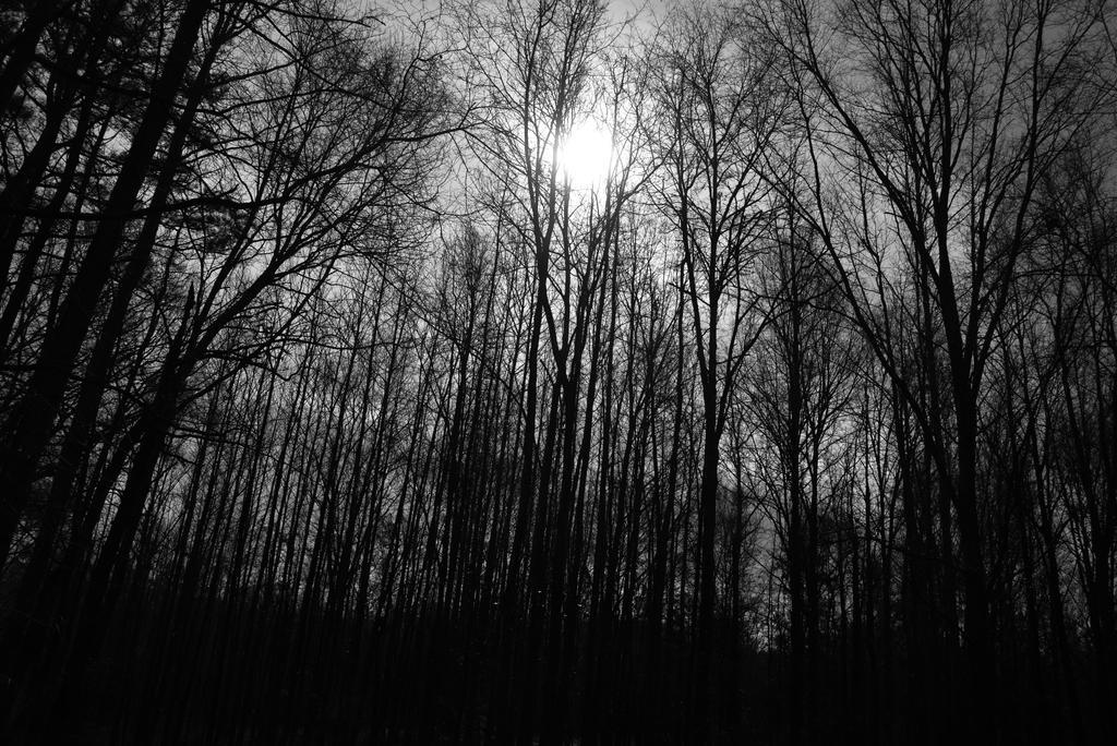 Still Winter by Tailgun2009