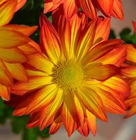 Just a Flower by Tailgun2009
