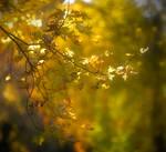 Fall Colors ending