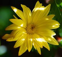 Oddball Bloom by Tailgun2009