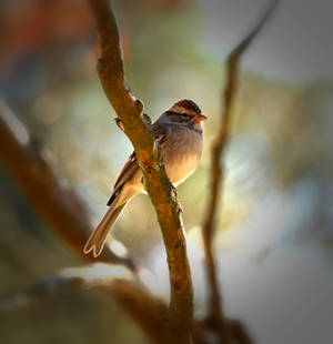 Tiny Sparrow 2 by Tailgun2009