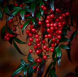 Bird Berries by Tailgun2009
