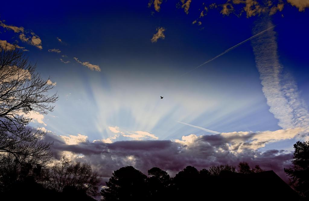 Rays by Tailgun2009