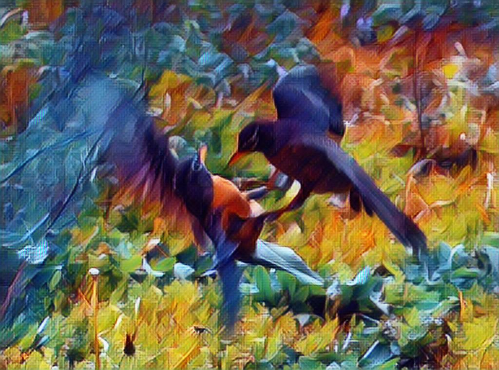 Robin Fight by Tailgun2009