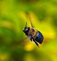 Pollen Bee by Tailgun2009