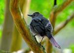 Young Wet Bird