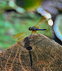 Dragonfly Art by Tailgun2009