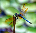 Damaged Dragonfly by Tailgun2009
