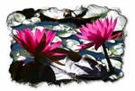 Backlit Swamp lilies