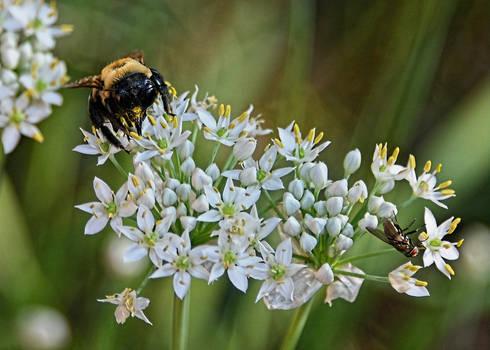 Pollen Collection