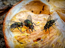 The Flies by Tailgun2009