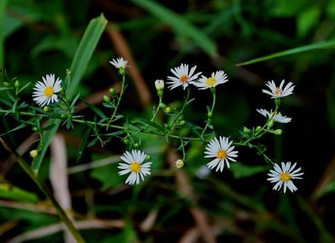 Tiny Swamp Flowers