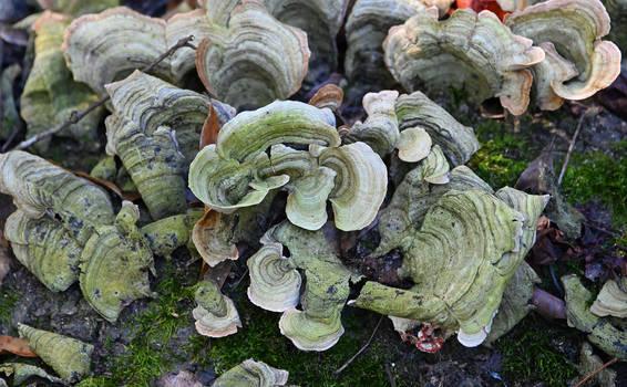 Swamp Fungi