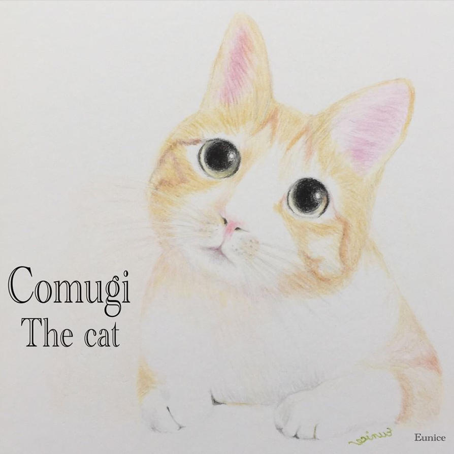 Comugi the cat by deviant-Eunice