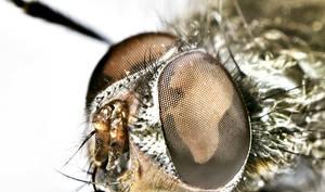 Fliege Macro by mogmog-ralf