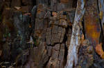 Fragments of dying wood 2
