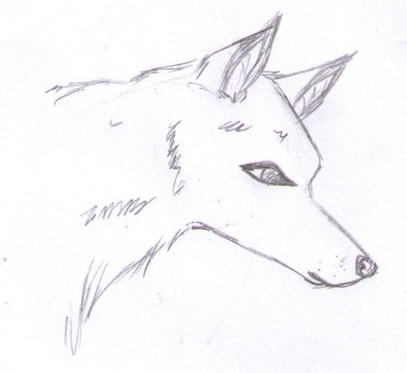 Jolie Blogs Anime Wolf Head