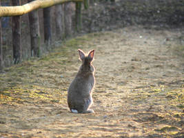 rabbit by coff33junk