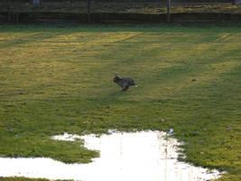 running rabbit by coff33junk