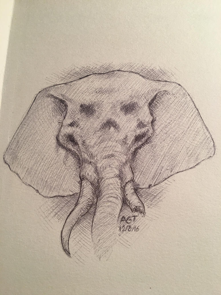 Elephant by shurkin