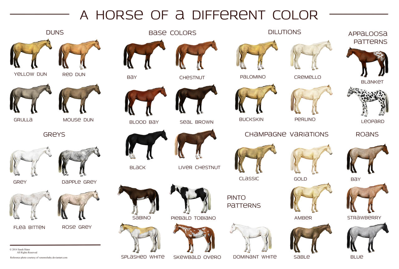 horse colors poster by reveraine on deviantart